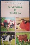 Коровы и телята Калининград