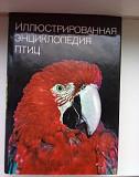 Большая иллюстрированная энциклопедия птиц Воронеж