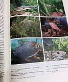 Книга, Экзотические рыбы Курск
