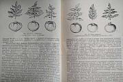 Книга Овощные культуры и другие Белгород
