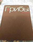 Грибы Ф.В. Федоров Казань
