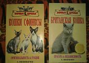Британская кошка.Кошки сфинксы Волгоград